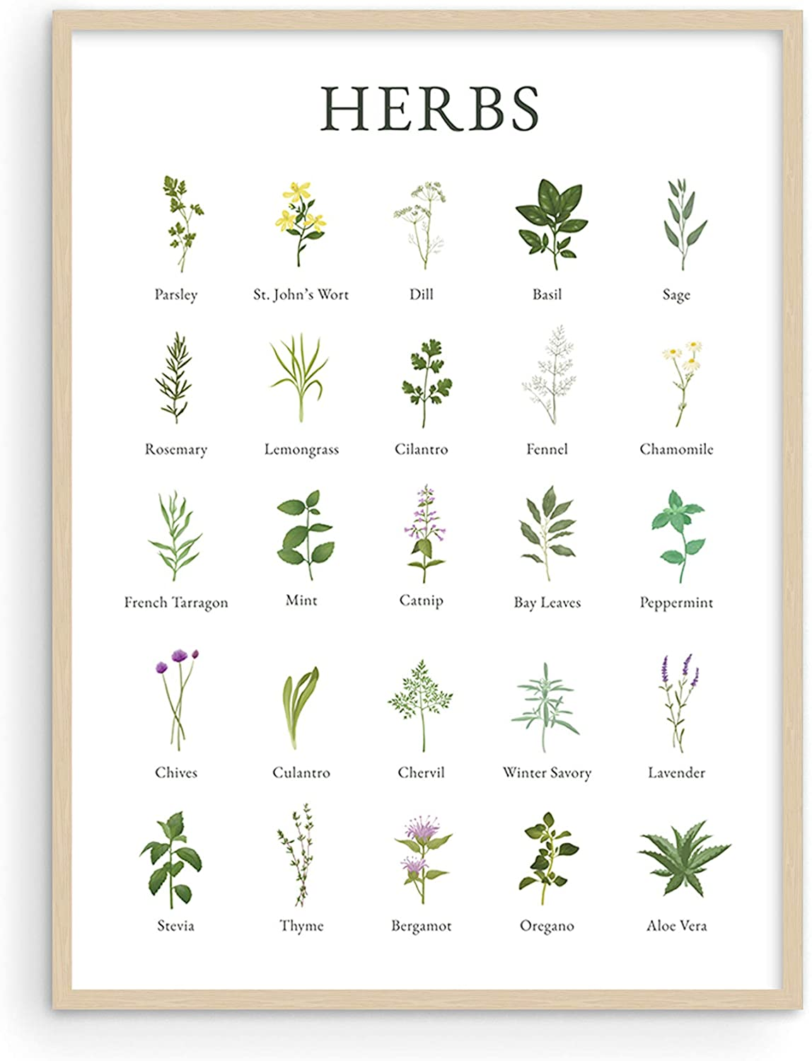 "HAUS AND HUES Herb Pictures for Kitchen Wall Art Kitchen Herbs Wall Art and Botanical Prints Herbs Art | Kitchen Wall Art Herbs and Kitchen Art | Cottage Core Decor (12"" x 16"", UNFRAMED)"