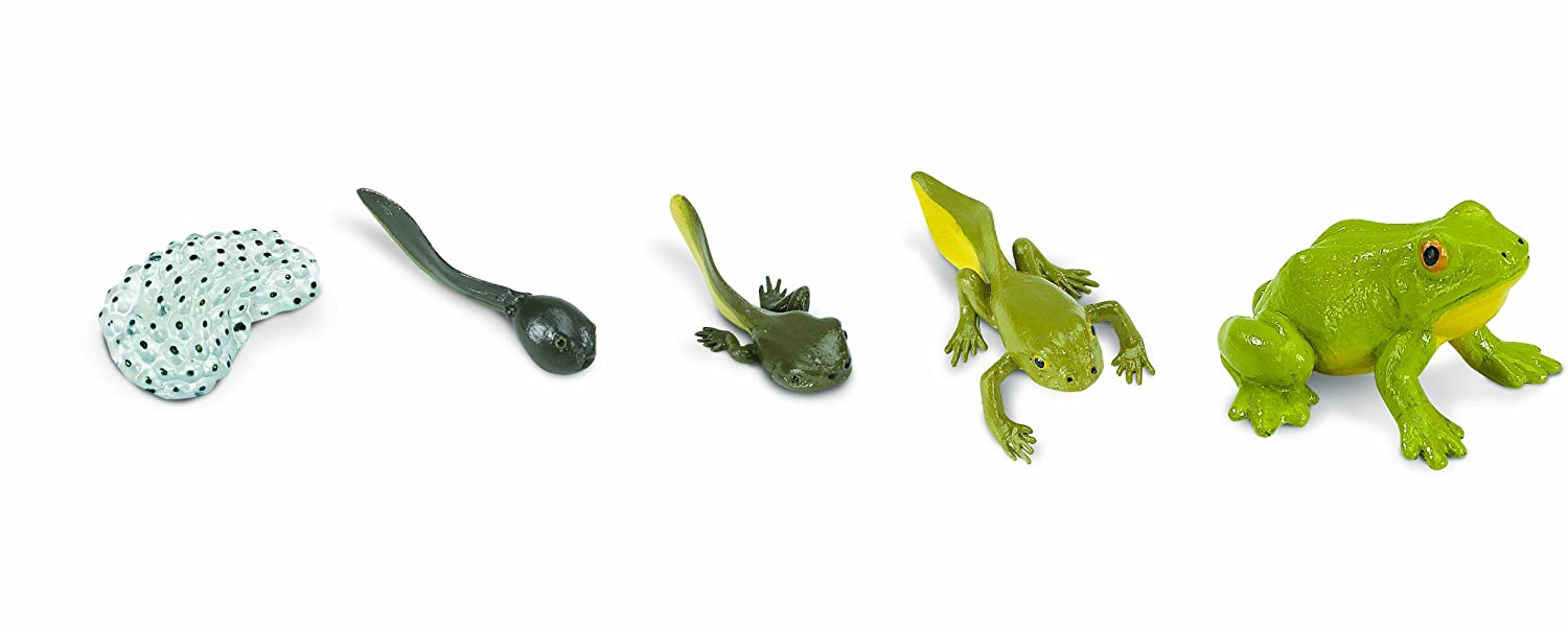life cycle of a frog figurines