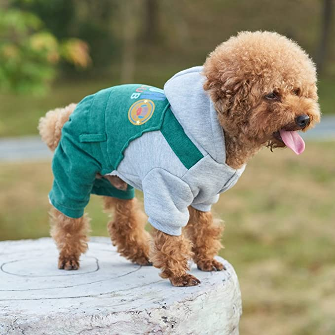 Wenquan,Trajes de vestir abrigos con capucha para perrito pequeño medio grande perros(color:Verde,size:M): Amazon.es: Hogar
