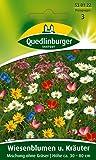 Blumenwiese - Wiesenblumen u. Kräuter Mischung ohne Gräser von Quedlinburger