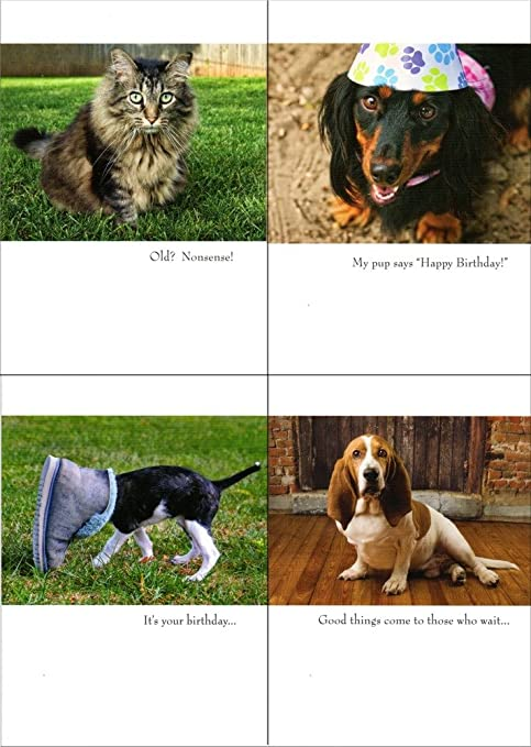 Amazon Cat And Dog Birthday Cards 35 Very Funny Cards For