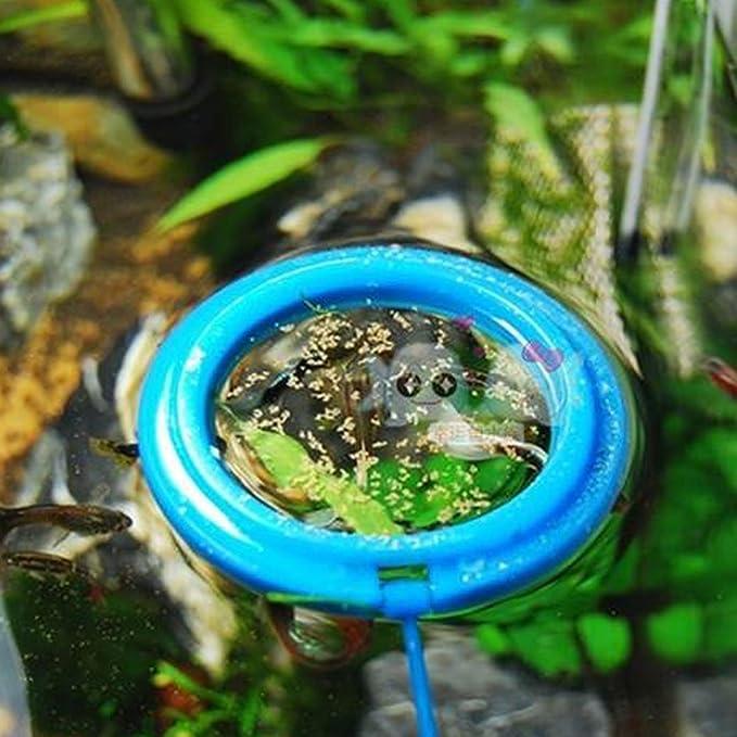 Amazon.com : eDealMax Forma Círculo de plástico peces de acuario ...