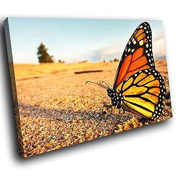 sc435ssp encadrée Toile Art mural Motif de la - Noir Papillon Jaune ...