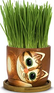 Window Garden - Cat Grass Growing Kit with Kitty Pot Planter - Purrfect for Cat and Pet Lovers.Wheatgrass Snack Includes Soil and Organic Seed. Top Quality, Super Cute Gift, Christmas, Mothers Day.