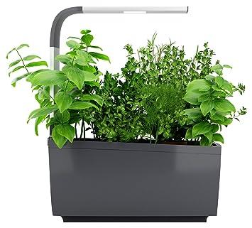 Tregren T6 Potager D Interieur Connecte 6 Plantes Kit Pret A