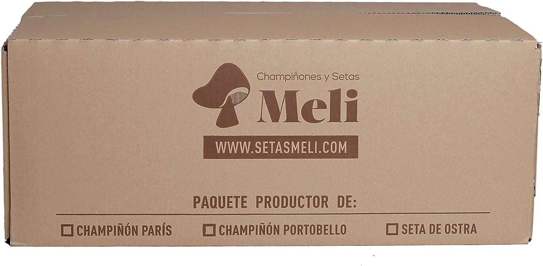 SETAS MELI   Alpaca Productora Seta de Ostra   Para cultivar en casa   Alpaca perfecta para regalar   Hecho en España