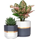 Mkono Ceramic Planters 5 and 6.3 Inch Indoor Modern Flower Plant Pot Set of 2 Geometric Gardening Pots with Drainage for All House Plants, Herbs, Flowers, Gold and Grey Detailing (Plants NOT Included)