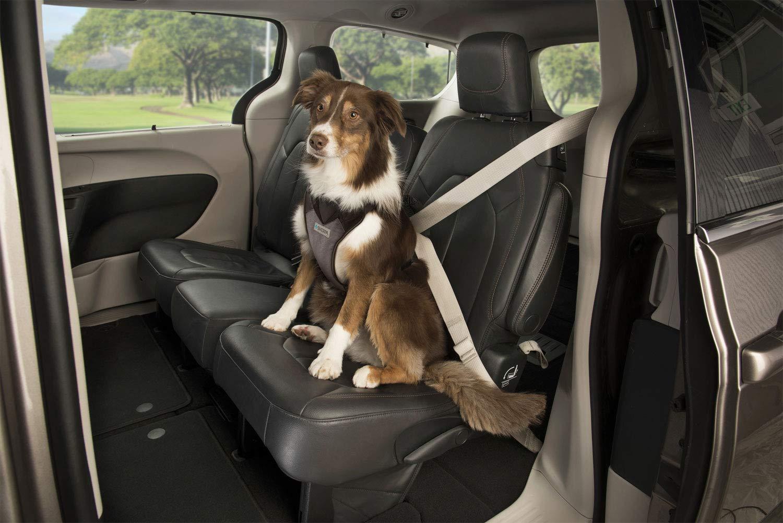 Sherpa Crash Tested Seatbelt Safety Harness, Black, Medium