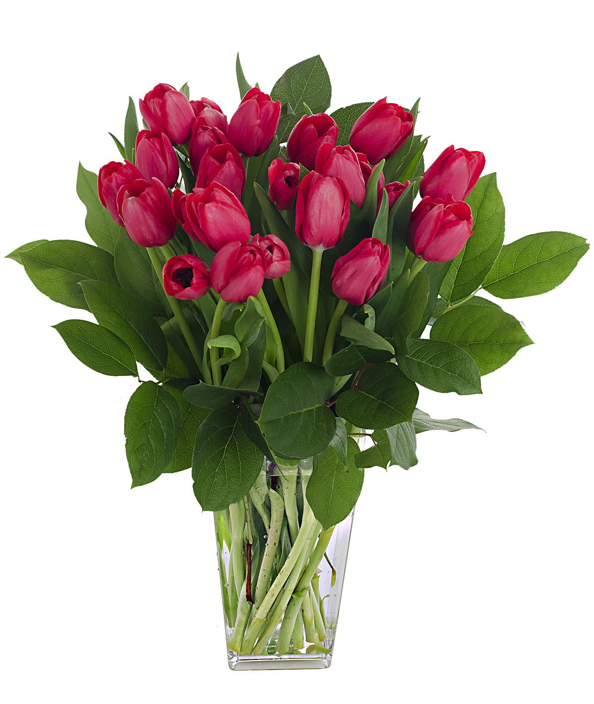 Stargazer Barn - Passion Bouquet - 2 Dozen Red Tulips With Clear Vase