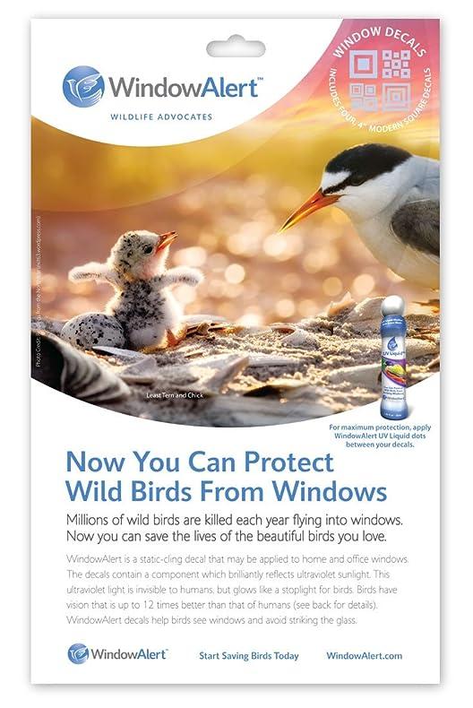 Amazoncom Birds Choice Window Alert Modern Square Home And - Window alert hummingbird decals amazon