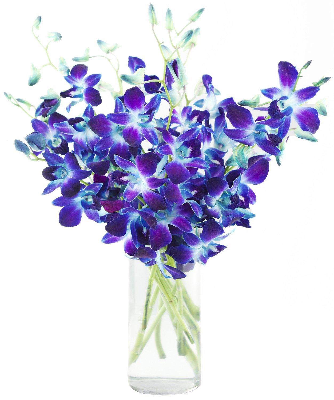 Premium Cut Blue Orchids (10 Stems Orchid with Vase) by eflowerwholesale