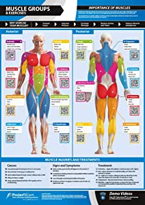 "Gym & Exercise Workout Posters | Anterior & Posterior Muscles & Muscle Building Exercises, Laminated Gym & Home Poster, Free Online Video Training Support, Large Size 33"" X 23.5"" Improves Fitness"