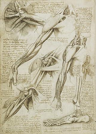Vintage Anatomie LEONARDO da VINCI Studium des Armes und des Fußes ...