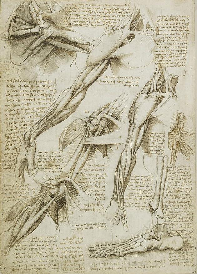Ungewöhnlich Wie Hat Leonardo Weiterhin über Anatomie Lernen Galerie ...