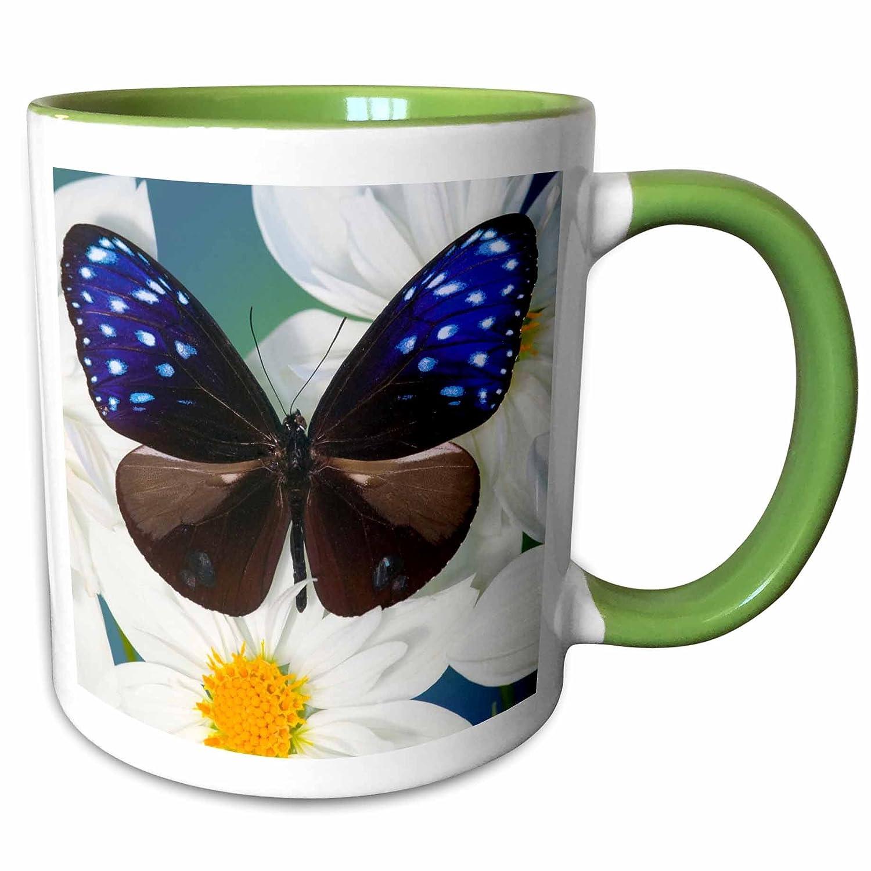 Green Mug Striped Blue Crow Butterfly US48 DGU0560 Darrell Gulin 3dRose 95510/_7 Flowers 11 oz