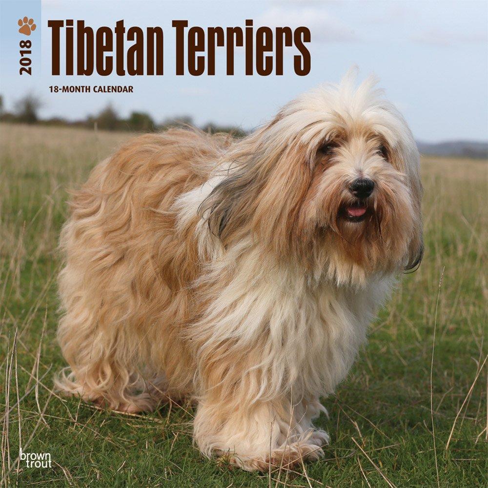 Tibetan Terriers - Tibet-Terrier 2018-18-Monatskalender mit freier DogDays-App: Original BrownTrout-Kalender [Mehrsprachig] [Kalender] (Wall-Kalender)