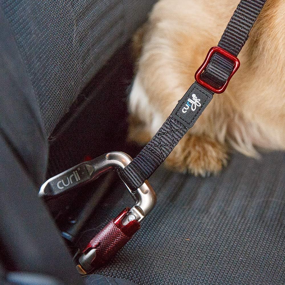 Curli Cinturón de Seguridad para Perros para Coche: Amazon.es ...