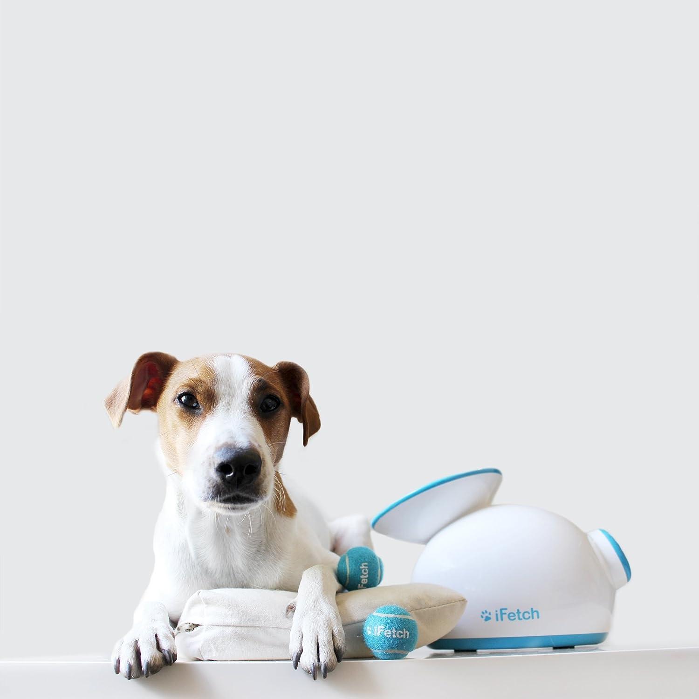 Lanzador de pelotas automático para perros iFetch: Amazon.es ...