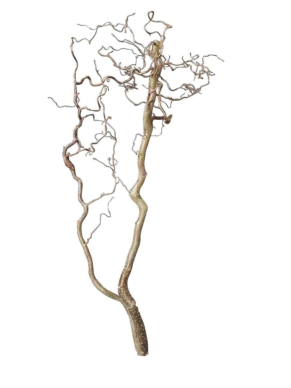 Korkenzieher-Dekoast: Landhausdeko Frühling - Dekoäste Natur - Osterdeko Wohnzimmer (ca. 40 cm lang; 10 cm breit) Dekozweig