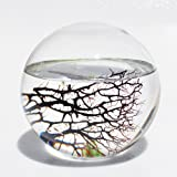 EcoSphere Closed Aquatic Ecosystem, Sphere, with Revolving Base