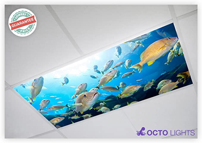 Fluorescent Light Covers Ocean 001