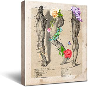 Anatomy Leg Muscle Canvas Wall Art for Doctor Office Decor, Medical School Graduation Gift, Social Worker Graduation Gift, Occupational Therapist Gift Size 8x10
