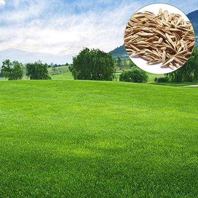 Seeds for Planting 50Pcs Grass Seeds Bonsai Eco-Friendly Indoor Garden Plants : Garden & Outdoor