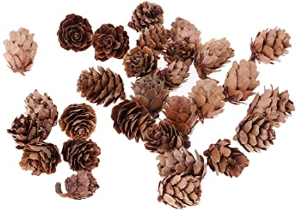 Prettyia 30x Mini Natural Dried Pine Cones For Christmas Party Ornament DIY