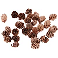HOMYL Mini Small Natural Dried Pine Cones in Bulk Dried Flowers for Christmas Decoration or Crafting Pack of 30 Pcs