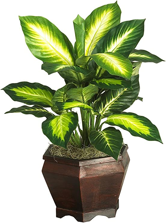 Nearly Natural 6592 05 Golden Dieffenbachia With Wood Vase Decorative Silk Plant Green Home Kitchen