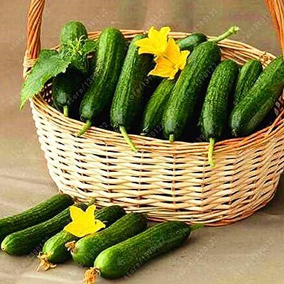 Weardear 100 Seeds Per Pack Vegetable Seeds Cucumber Seeds Melon and Fruit Vegetables : Garden & Outdoor