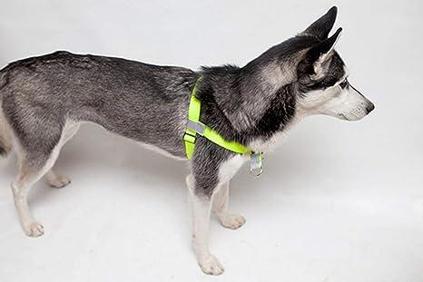 Walk Your Dog With Love EL Arnés para Perros sportso: Amazon.es ...