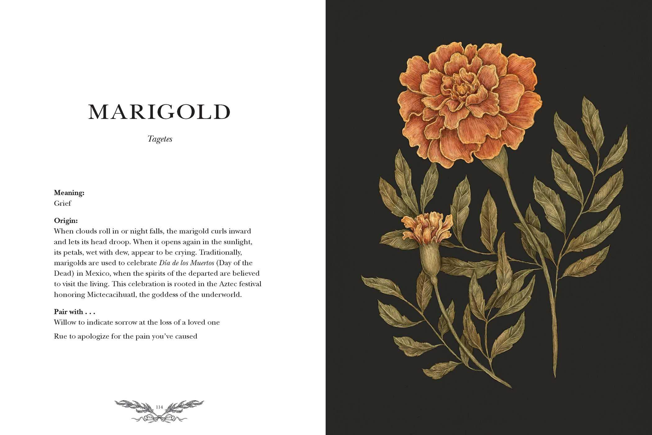 MARIGOLD. Tagetes Meaning: Grief Origin: When clouds roll in or night falls, the marigold curls inward and lets its head droop. When it opens again in the sunlight, its petals, wet with dew, appear to be crying. Traditionally, marigolds are used to celebrate Día de los Muertos (Day of the Dead) in Mexico, when the spirits of the departed are believed to visit the living.