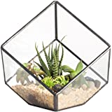3.93 inches Geometric Decorative Terrarium Cube Inclined Clear Glass Planter Tabletop Black Small Air Plant Holder Display Box Succulent Moss Flower Pot Containers Diy Centerpiece (No Plants)