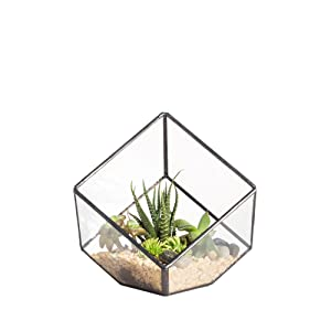 NCYP 3.93 inches Geometric Decorative Terrarium Cube Inclined Clear Glass Planter Tabletop Black Small Air Plant Holder Display Box Succulent Moss Flower Pot Containers DIY Centerpiece (No Plants)