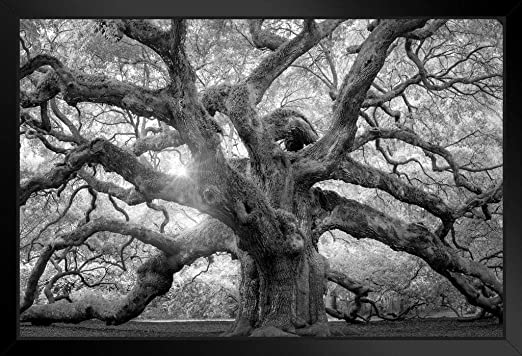 amazon com angel oak tree monochrome charleston south carolina black white nature photo art print stand or hang wood frame display poster print 9x13 posters prints amazon com