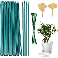 Shengruili Varillas para plantas de madera, color verde, con cintas de sujeción metálicas, soporte para plantas (100 BH)