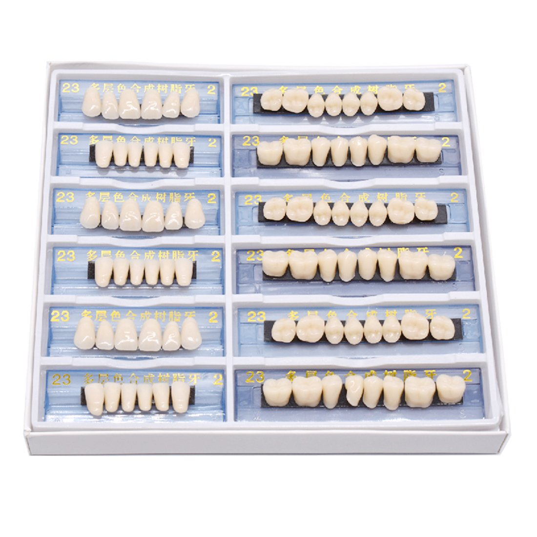 Oral Dentistry 168pcs/set Dental Complete Acrylic Resin Denture Dental Teeth Upper+Lower Shade 23 A2 Oral Care Whitening Tooth Model Dental Materials