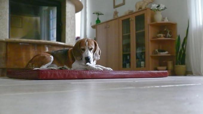 Omar - Ortho ortopédico hundematte piel sintética Perros cama colchón 100 x 150 burdeos: Amazon.es: Productos para mascotas