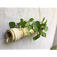 RARE PRODUCTS OOTY Hand Made Hanging Bamboo Pot with Adjustable Rope and Wood Polish Finished Surface with one Garden Disposable Gloves