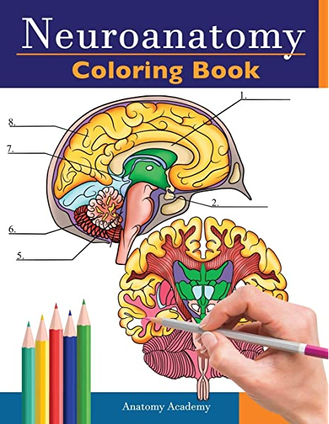 The Human Brain Coloring Book (Coloring Concepts): Diamond, Marian C.,  Scheibel, Arnold B: 8583323156149: Amazon.com: Books