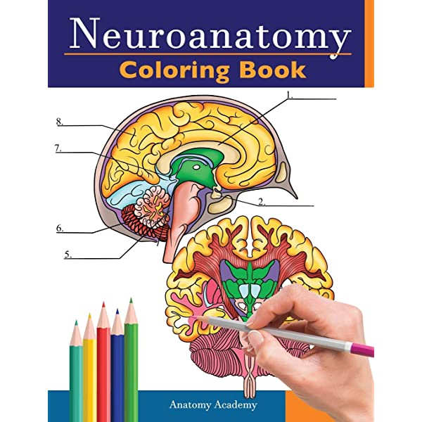 Neuroanatomy Coloring Book Incredibly Detailed Self Test Human Brain Coloring Book For Neuroscience Perfect Gift For Medical School Students Nurses Doctors And Adults Academy Anatomy 9781838188610 Amazon Com Books