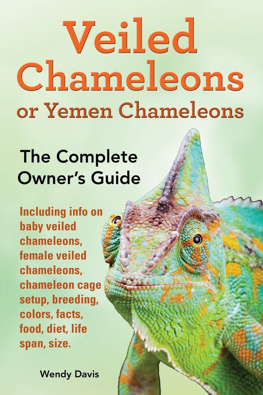 Veiled Chameleons or Yemen Chameleons as pets. info on baby veiled chameleons, female veiled chameleons, chameleon cage setup, breeding, colors, facts, food, diet, life span, size.