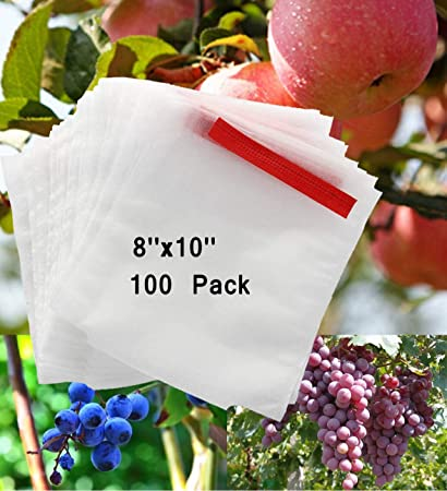Amazon.com: Ibely - Bolsas de protección de frutas ...