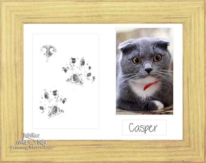 BabyRice Cat Pet Paw Print Pawprints Kit Oak Effect Photo