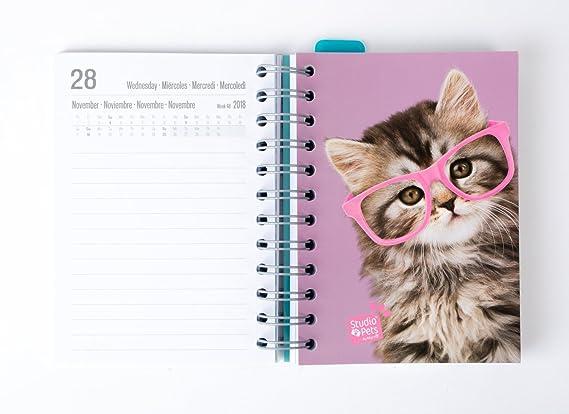 Grupo Erik Editores Studio Pets Gato- Agenda escolar 2018-2019 día página multilingüe, 11.4 x 16 cm: Amazon.es: Oficina y papelería