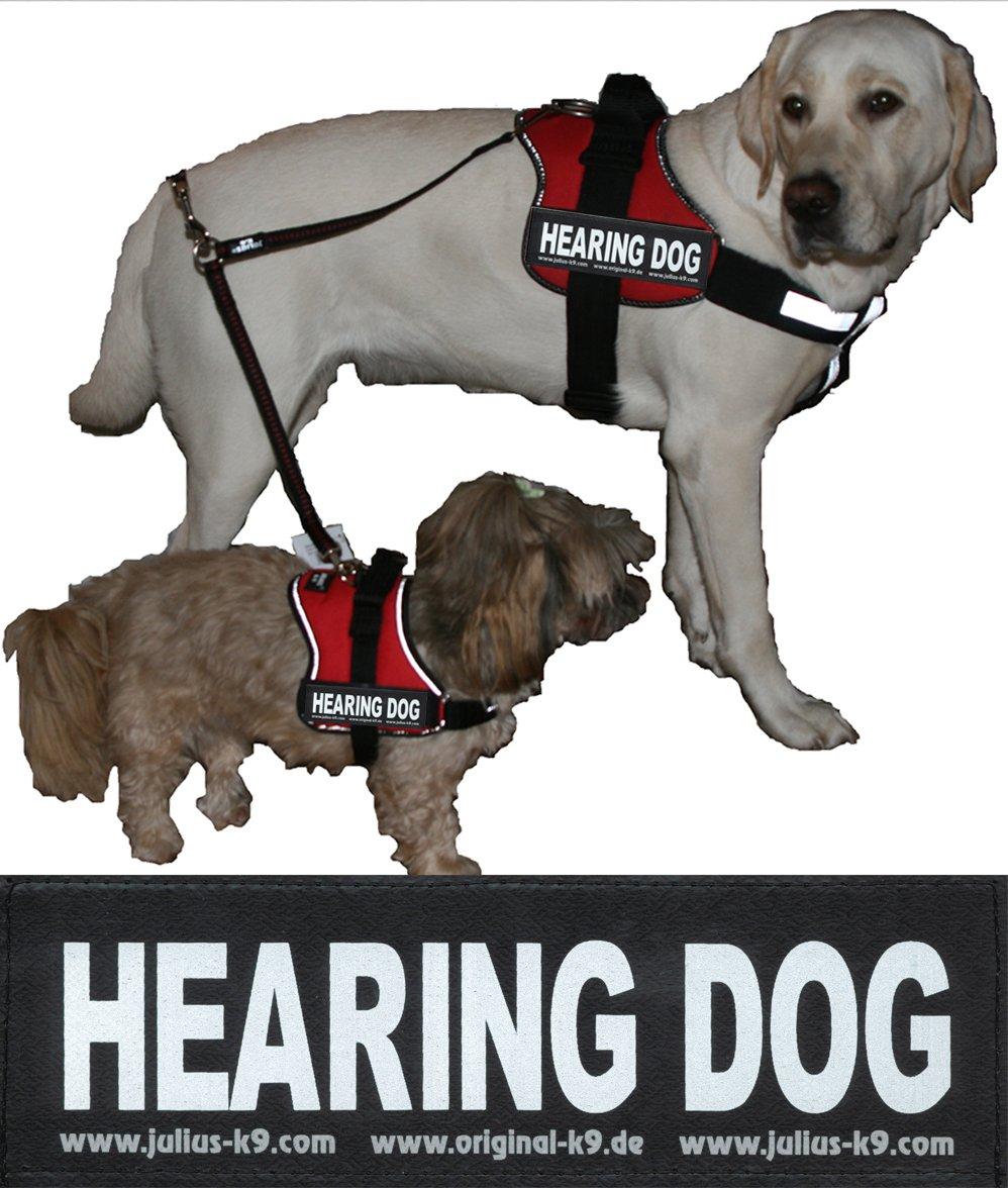 Hearing Dog - 2 Logos Grande Talla, Blancos y Reflectantes para ...