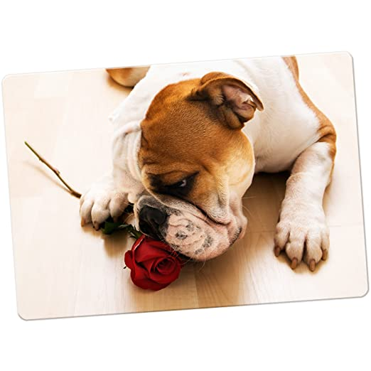 British Bulldog Inglés imán para nevera, Bull Dog With Red Rose ...