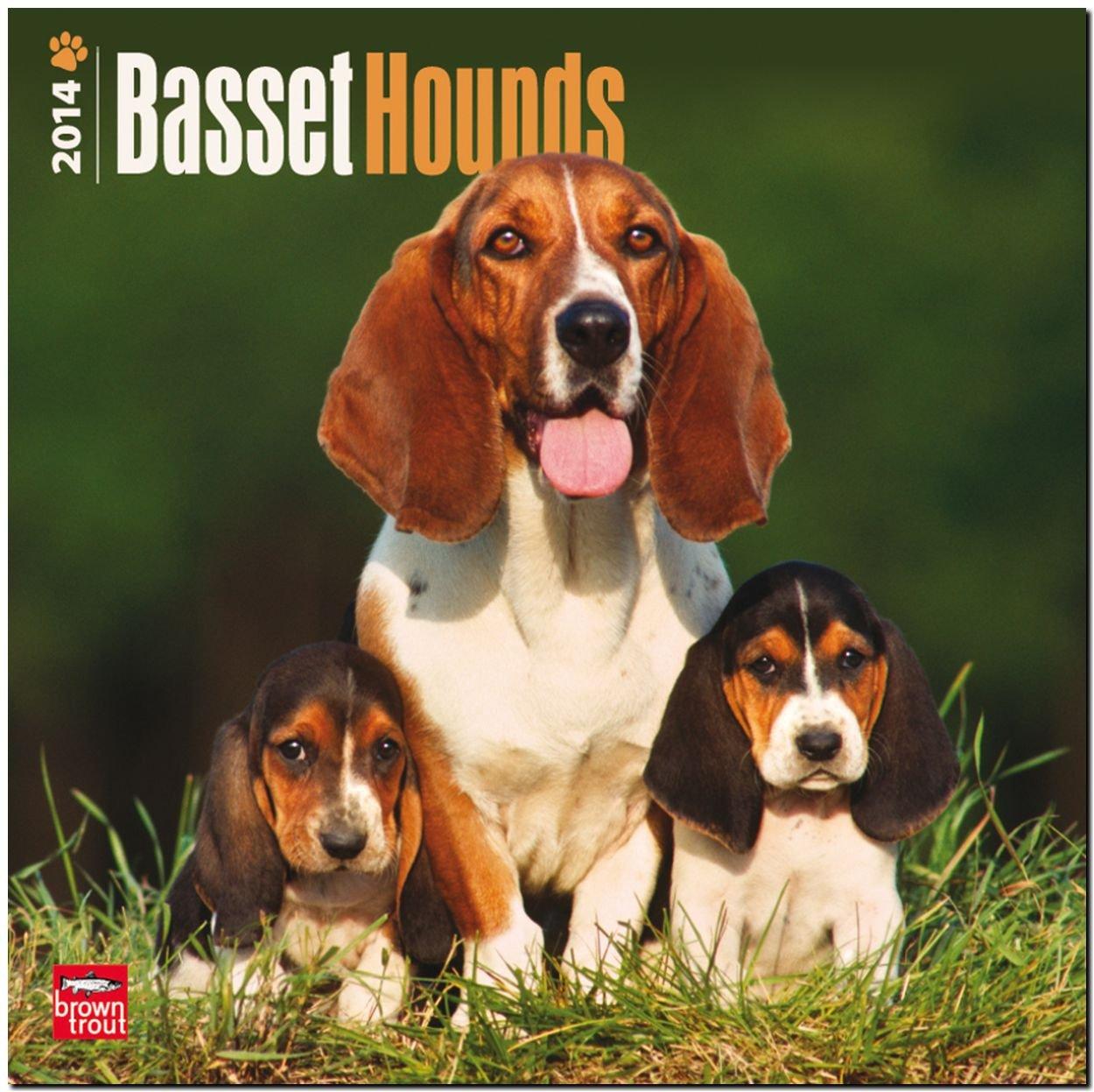 Basset Hounds 2014 - Bassets: Original BrownTrout-Kalender [Mehrsprachig] [Kalender]
