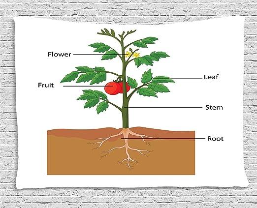 ABAKUHAUS Biología Tapiz de Pared, Partes De Una Planta De Tomate ...